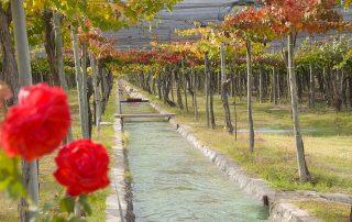 11-Finca La Sede. Un día de riego con agua proveniente del deshielo de la Cordillera de Los Andes